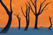 deadvlei painting picture